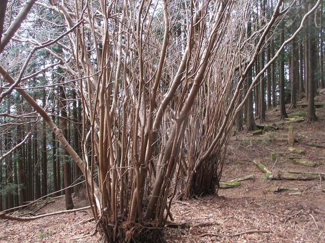 画像4: 3月の山旅会・現地集合 「高松山」 ツアーの下見に行ってきました!