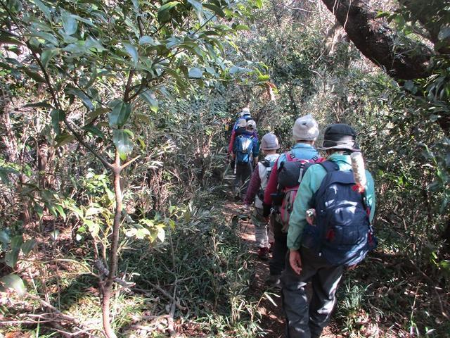 画像7: 2月23日に 山旅会 「仙元山から茅塚」 ツアーに行ってきました!