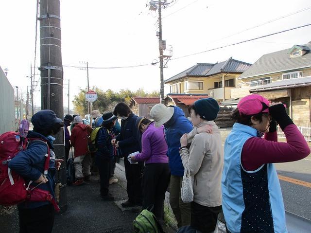 画像8: 2月23日に 山旅会 「仙元山から茅塚」 ツアーに行ってきました!