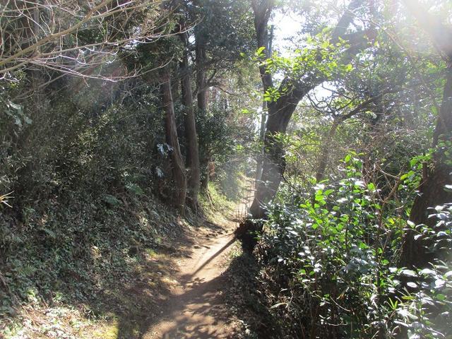画像4: 2月23日に 山旅会 「仙元山から茅塚」 ツアーに行ってきました!