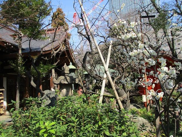 画像7: 【山旅会・登山ガイドこだわりツアー】岡田ガイドからの便り・都内の山ツアーに行ってきました!