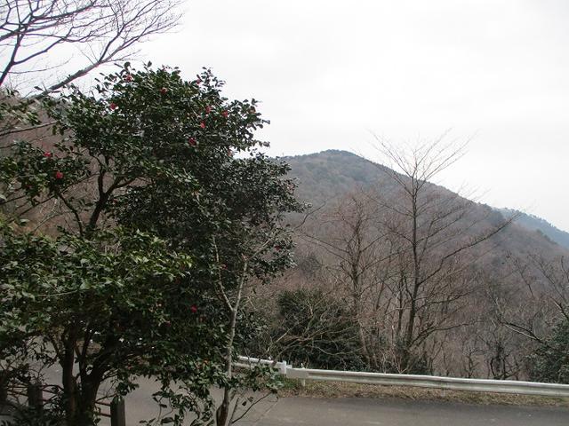 画像7: 来年の冬の企画素材を探しに、湯河原の城山に行ってきました!
