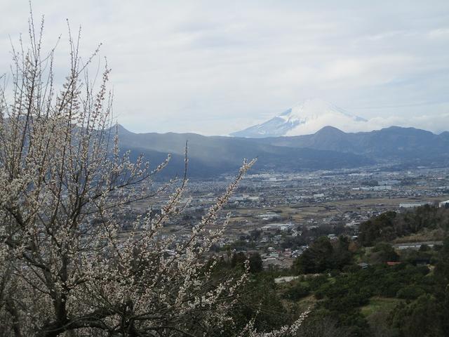 画像3: 山旅会ツアー4月までの催行状況のお知らせ!