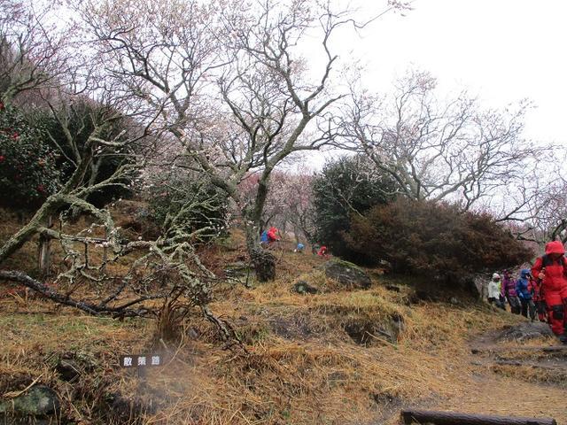 画像9: 2月28日に山旅会 「幕山と南郷山」 ツアーに行ってきました!