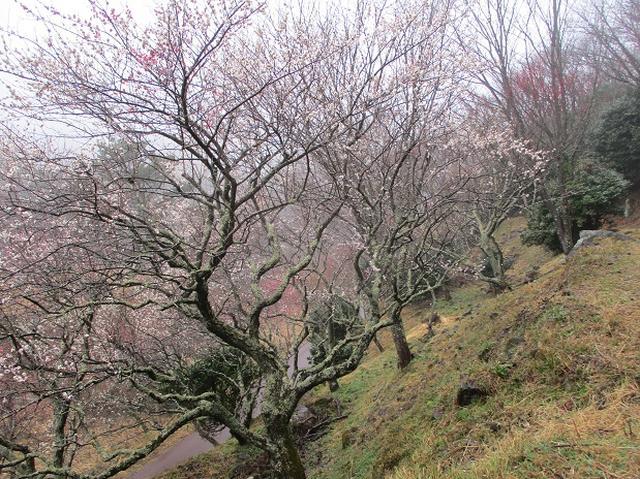 画像2: 2月28日に山旅会 「幕山と南郷山」 ツアーに行ってきました!