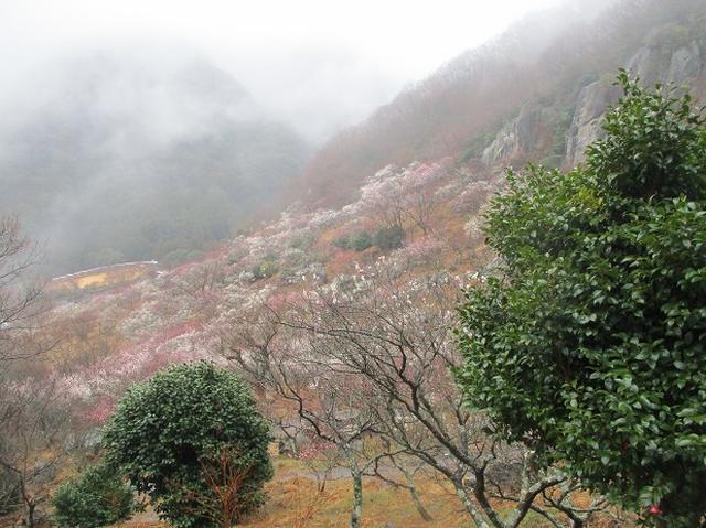 画像8: 2月28日に山旅会 「幕山と南郷山」 ツアーに行ってきました!