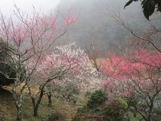 画像1: 2月28日に山旅会 「幕山と南郷山」 ツアーに行ってきました!