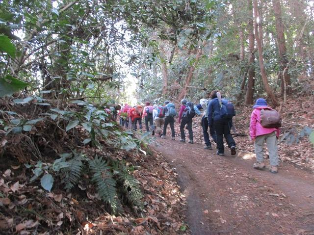 画像4: 2月25日に岡田ガイドのツアーで 曽我丘陵 へ行って来ました♪