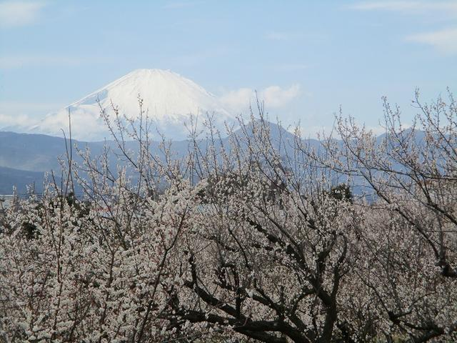 画像14: 2月25日に岡田ガイドのツアーで 曽我丘陵 へ行って来ました♪