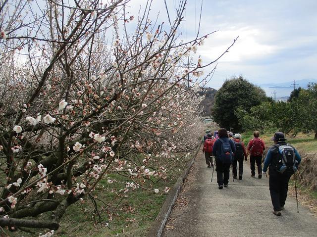 画像7: 2月25日に岡田ガイドのツアーで 曽我丘陵 へ行って来ました♪