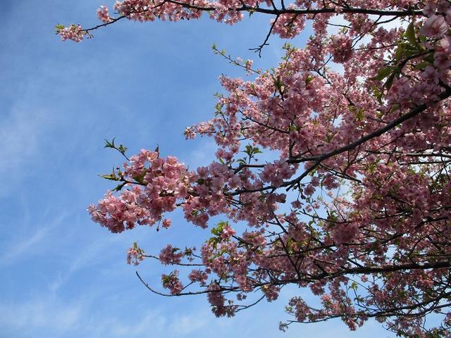 画像8: 3月2日に 安針塚から大楠山 ツアーに行ってきました!