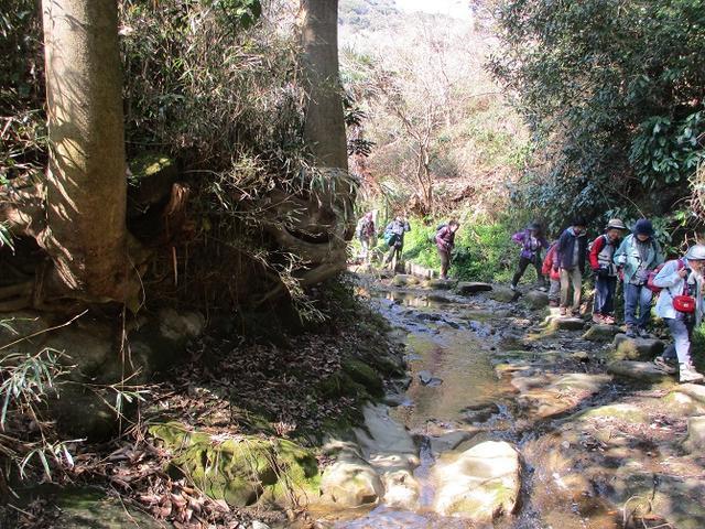 画像9: 3月2日に 安針塚から大楠山 ツアーに行ってきました!