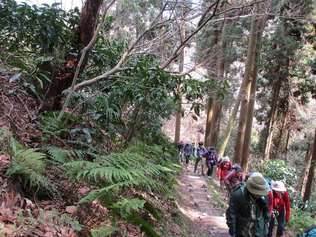 画像3: 3月2日に 安針塚から大楠山 ツアーに行ってきました!