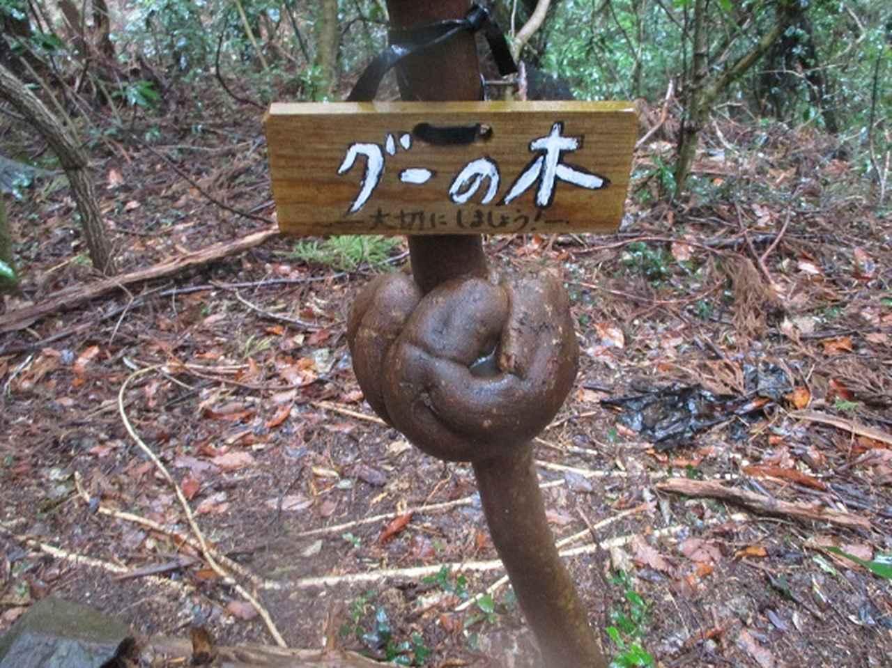 画像12: 3月4日に岡田ガイドのコースで、茨城県の 雪入山 へ行って来ました♪
