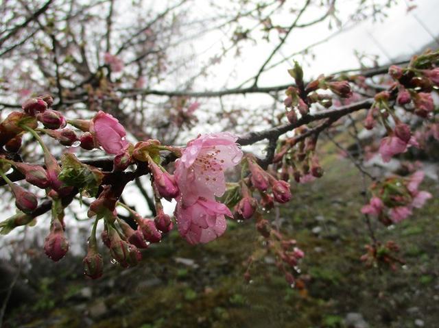 画像13: 3月4日に岡田ガイドのコースで、茨城県の 雪入山 へ行って来ました♪
