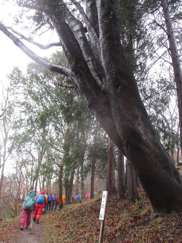 画像7: 3月4日に岡田ガイドのコースで、茨城県の 雪入山 へ行って来ました♪