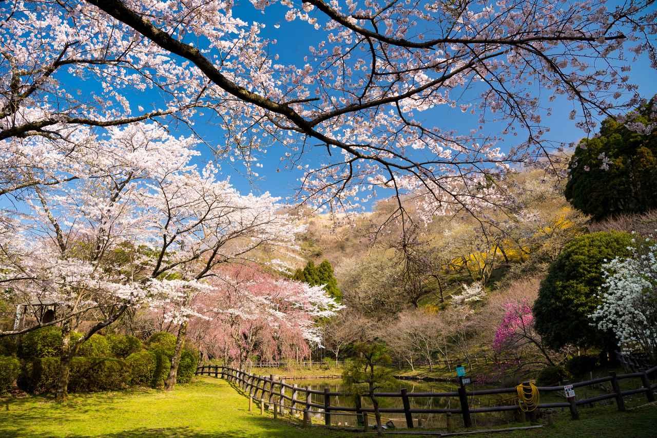 画像: 最明寺史跡公園(第1回) 海抜450mの地にしだれ桜や花桃など春の花が咲き乱れます
