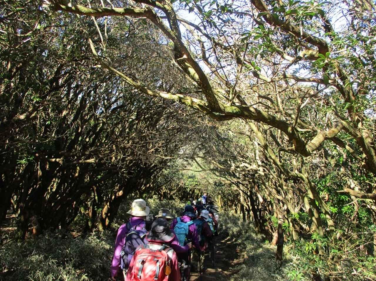 画像7: 3月8日に岡田ガイドと 達磨山 のツアーへ行ってきました♪