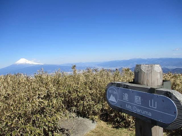画像5: 3月8日に岡田ガイドと 達磨山 のツアーへ行ってきました♪