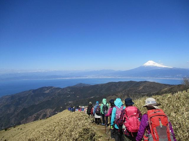 画像6: 3月8日に岡田ガイドと 達磨山 のツアーへ行ってきました♪