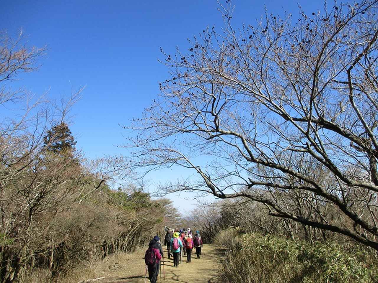 画像13: 3月8日に岡田ガイドと 達磨山 のツアーへ行ってきました♪