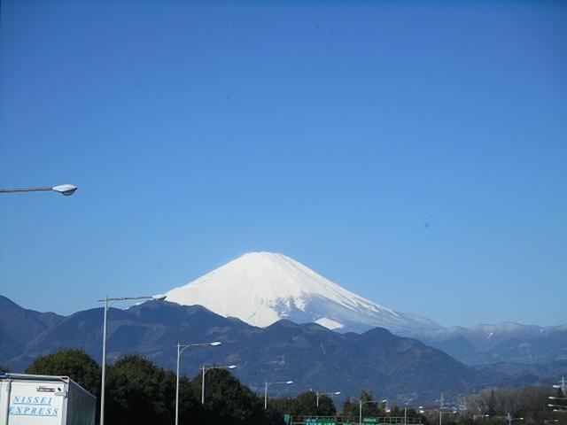 画像1: 3月8日に岡田ガイドと 達磨山 のツアーへ行ってきました♪