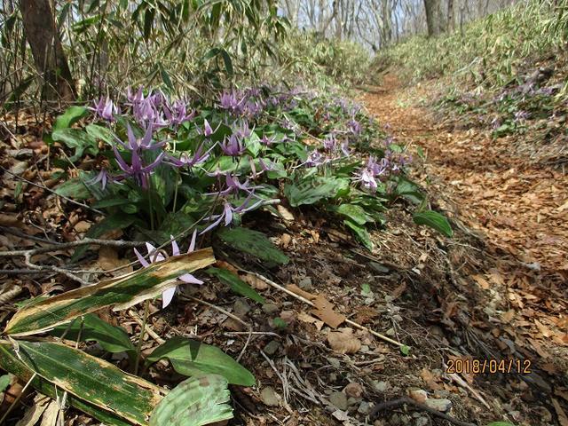 画像6: 4月に実施予定の 八溝山 ツアーのご案内です!
