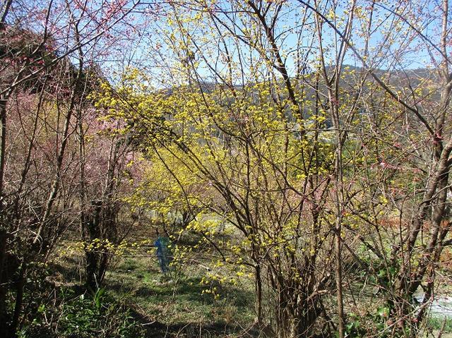 画像3: 日3月18日に山旅会 笠山から堂平山 ツアーに行ってきました!