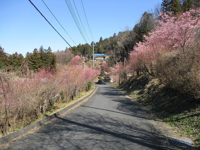 画像2: 日3月18日に山旅会 笠山から堂平山 ツアーに行ってきました!
