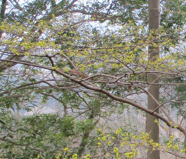 画像4: 3月21日に山旅会 大野山 ツアーに行ってきました!
