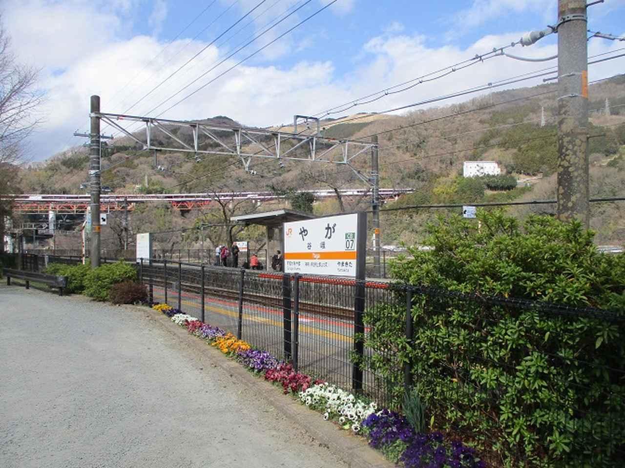 画像12: 3月21日に山旅会 大野山 ツアーに行ってきました!