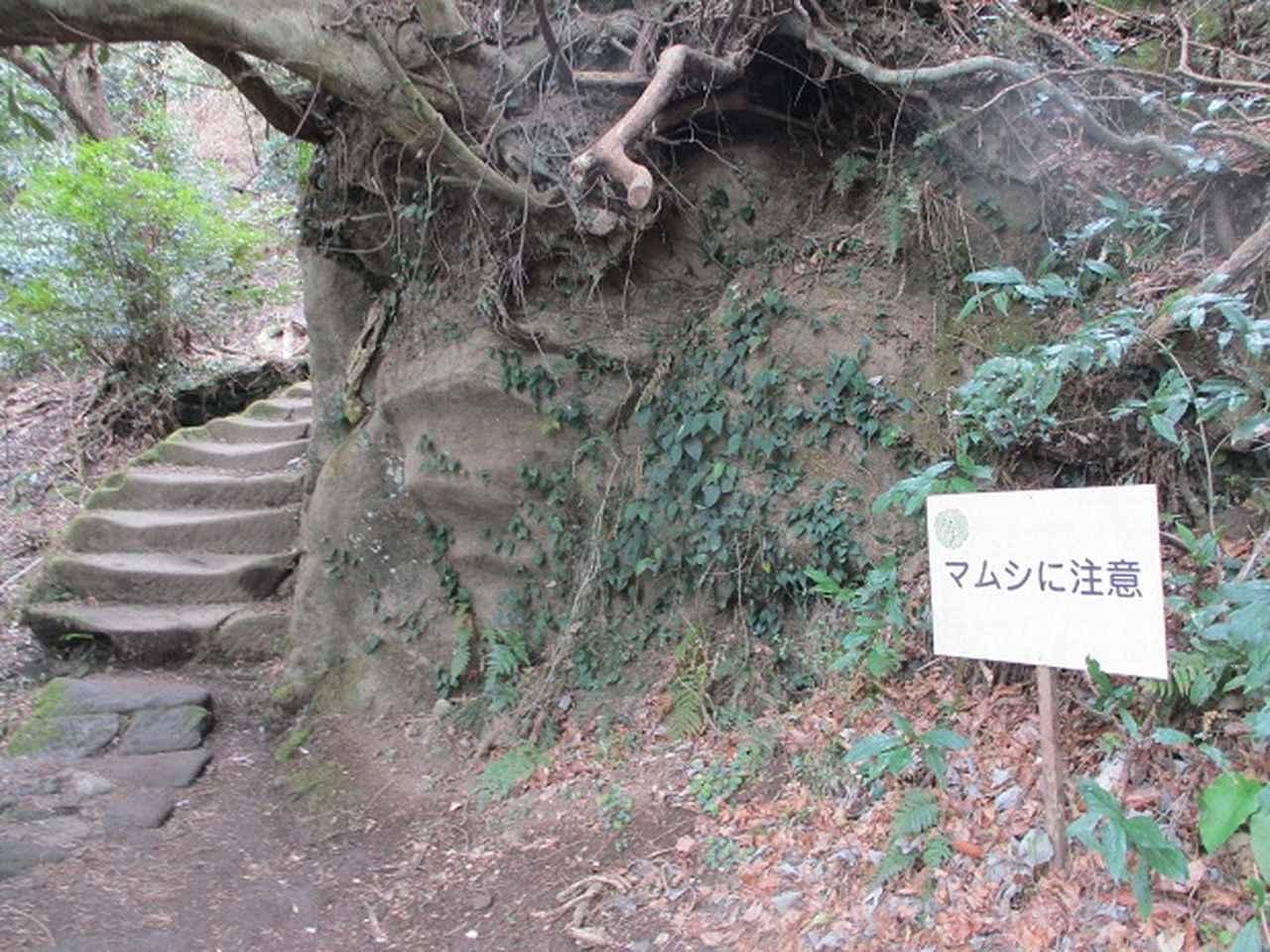 画像2: 3月23日に山旅会 「東京湾フェリーで行く鋸山」 ツアーに行ってきました!