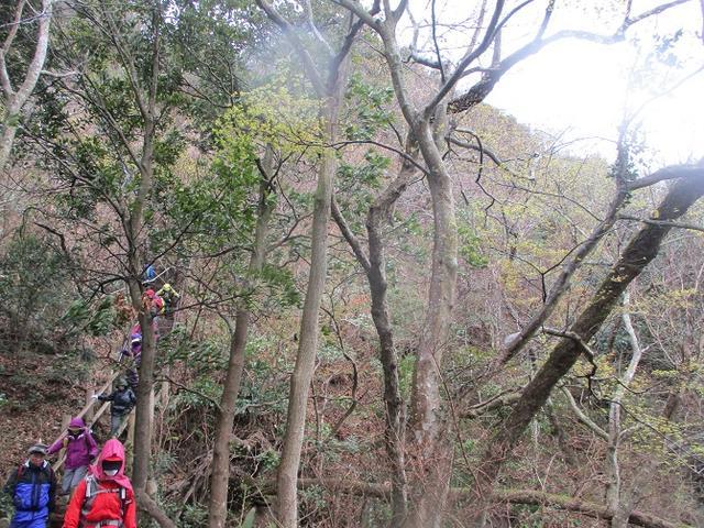 画像10: 3月23日に山旅会 「東京湾フェリーで行く鋸山」 ツアーに行ってきました!