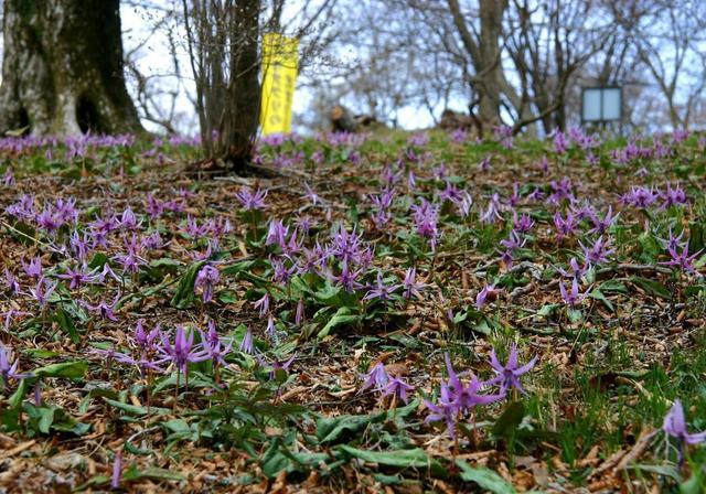 画像: 2019年4月スタート 頂きを彩る花々を訪ね歩く 全6回|クラブツーリズム