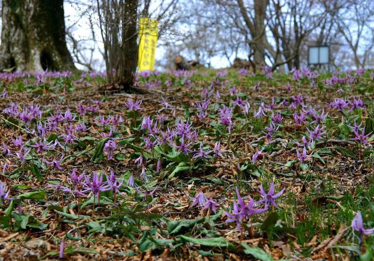 画像: 2019年4月スタート 頂きを彩る花々を訪ね歩く 全6回 クラブツーリズム