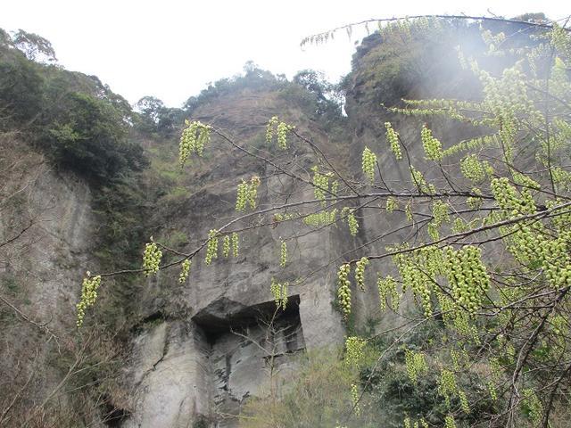 画像3: 3月23日に山旅会 「東京湾フェリーで行く鋸山」 ツアーに行ってきました!