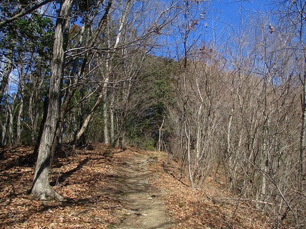 画像1: 3月の山旅会 「陣見山」 の直前下見報告です!