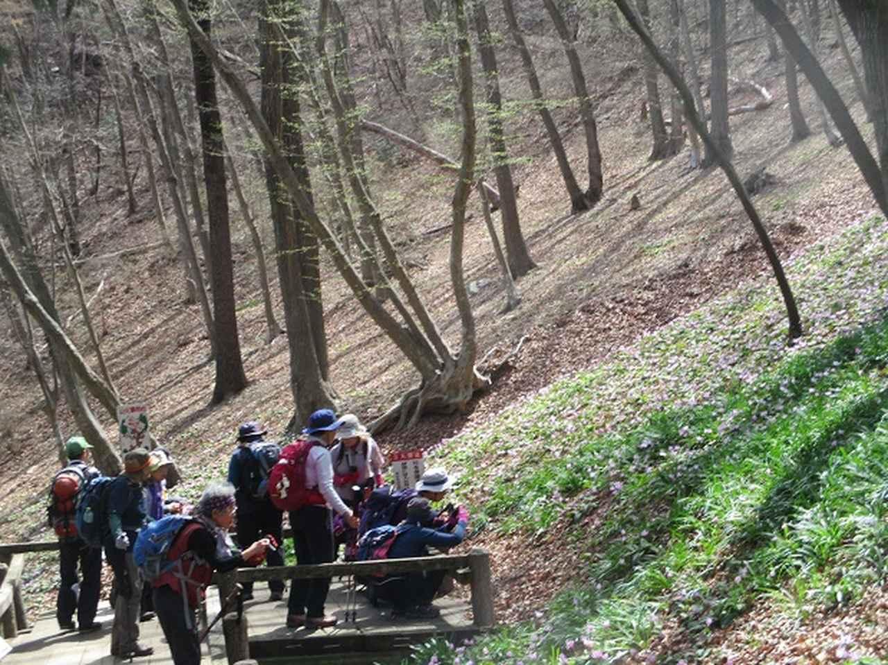 画像8: 3月22日にカタクリで有名な 三かも山 へ行ってきました♪