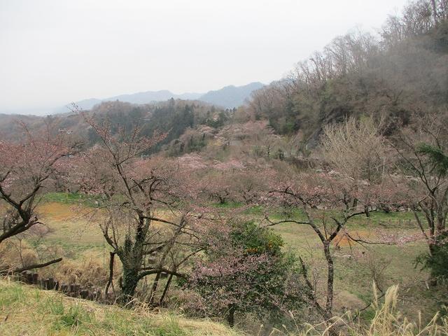 画像5: 3月30日に山旅会 「草戸山から城山カタクリの里」 コースへ行ってきました!