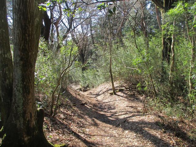画像5: 4月の山旅会 「湯坂路」 の直前下見報告です!
