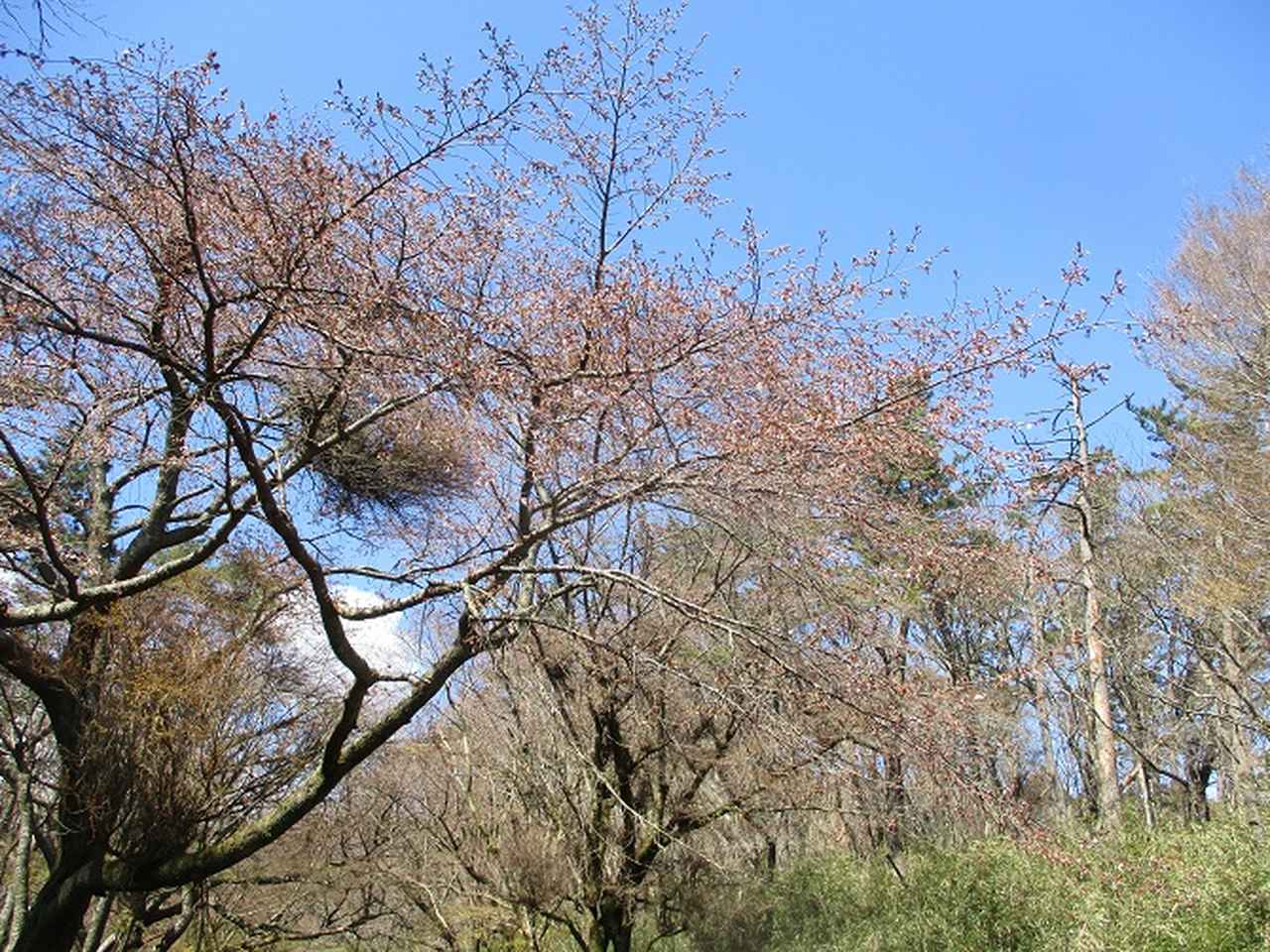 画像7: 4月の山旅会 「湯坂路」 の直前下見報告です!