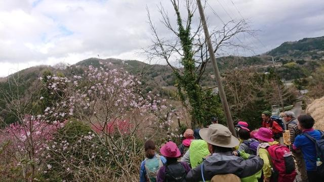 画像10: 3月21日に佐藤たけゆきガイドと、その名も!! たけ山~シダンゴ山 へ行ってきました♪