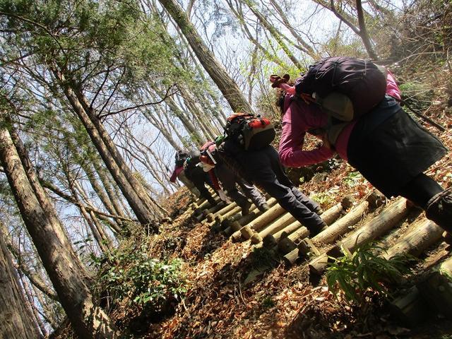 画像4: 3月28日に岡田ガイドのコースで、埼玉県にたたずむ 陣見山 へ行ってきました♪