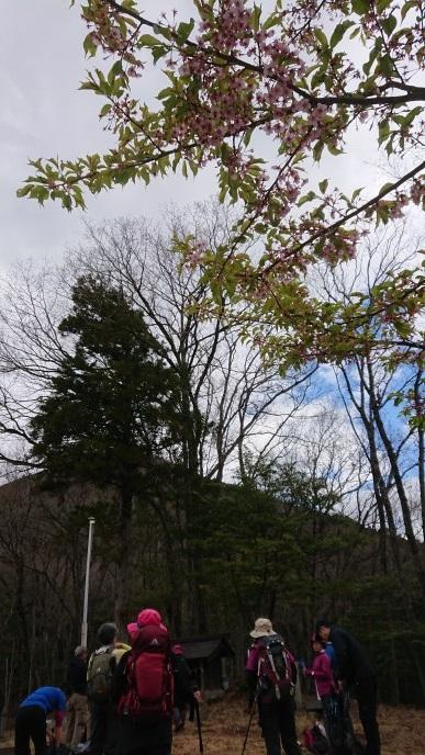 画像3: 3月21日に佐藤たけゆきガイドと、その名も!! たけ山~シダンゴ山 へ行ってきました♪