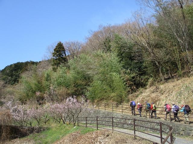 画像1: 3月28日に岡田ガイドのコースで、埼玉県にたたずむ 陣見山 へ行ってきました♪