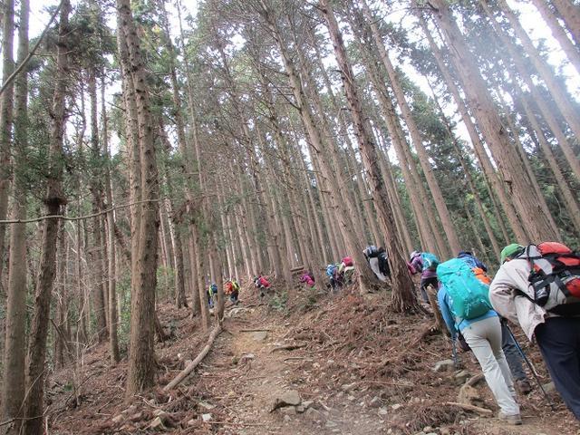 画像8: 3月28日に岡田ガイドのコースで、埼玉県にたたずむ 陣見山 へ行ってきました♪
