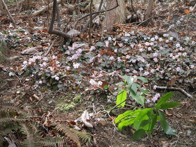 画像7: 4月1日に山旅会「盛金富士」ツアーにいってきました!