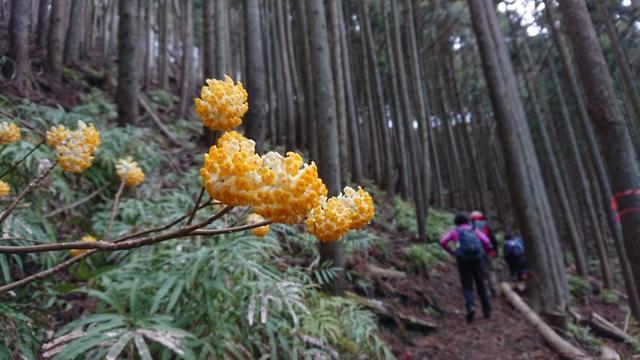 画像4: 3月21日に佐藤たけゆきガイドと、その名も!! たけ山~シダンゴ山 へ行ってきました♪