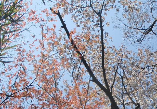画像9: 4月6日に山旅会 「箱根・湯坂路」 ツアーに行ってきました!