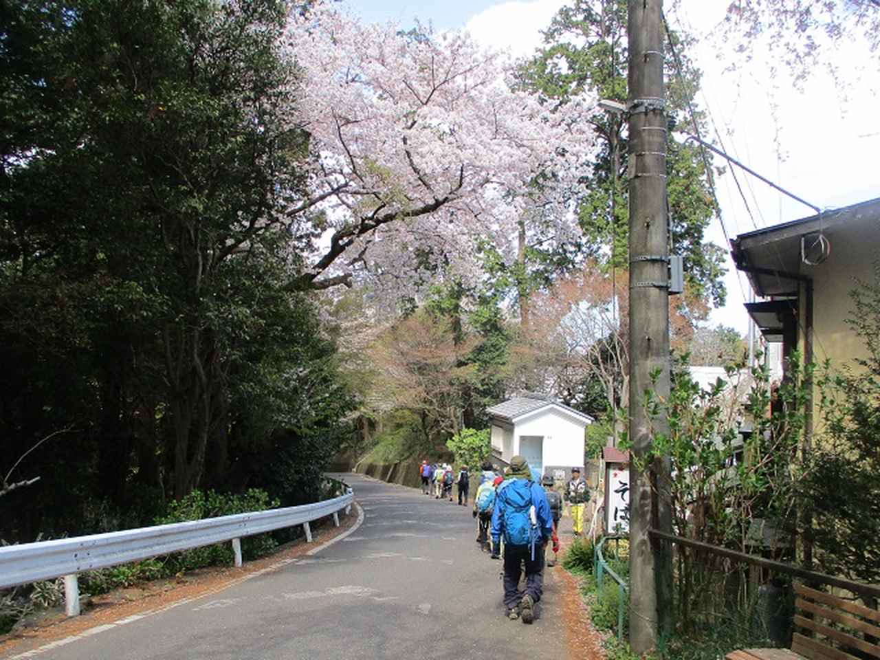 画像11: 4月9日に山旅会 晃石山から太平山 ツアーに行ってきました! にいって